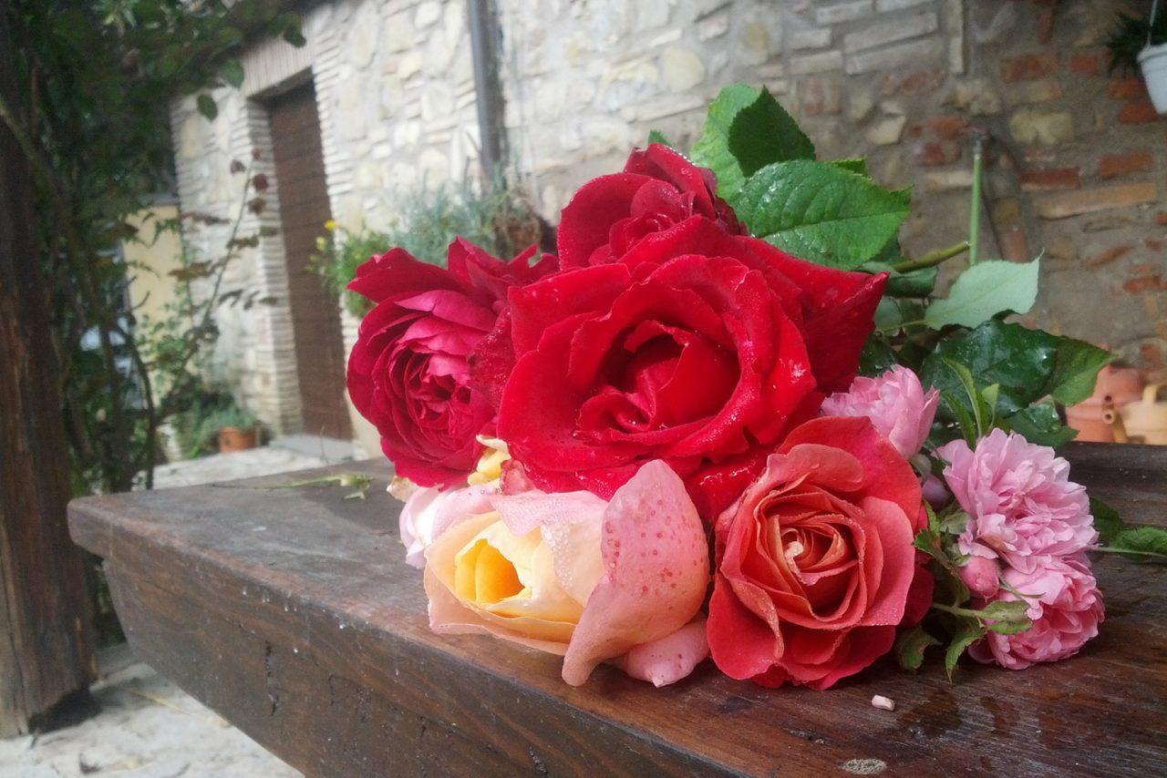 Le rose antiche italiane dalla prospettiva anglosassone