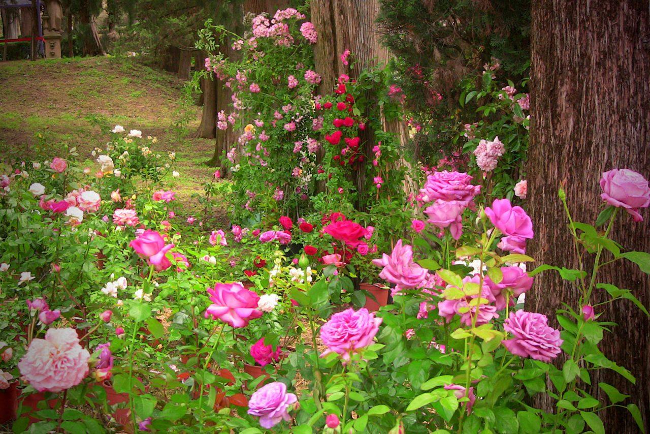 """1° Concorso """"I Giardini delle Rose"""""""