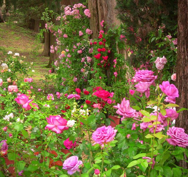 """Concorso """"I giardini delle rose"""""""