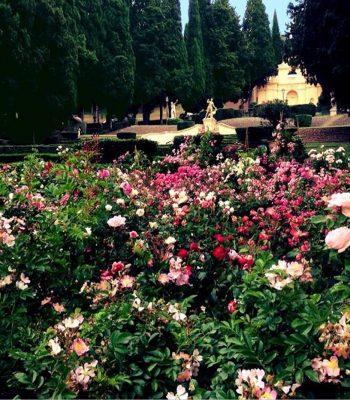 """30mila visitatori alla quinta edizione de """"I Giorni delle Rose"""""""