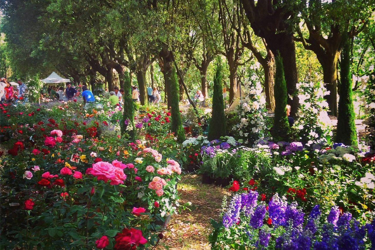 L'evento dedicato alle rose affascina il pubblico