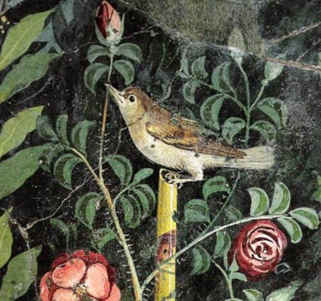 La Rosa di Pompei… dopo 2000 anni è pronta a rinascere