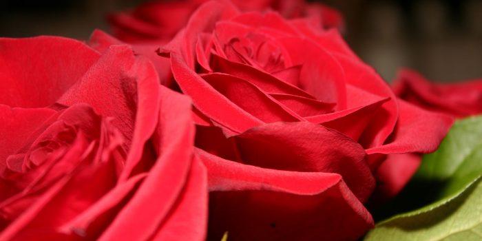 """VII Concorso di Poesia """"Il Sempre delle Rose"""""""