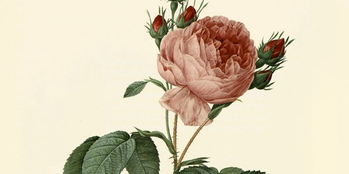 Rose perdute e ritrovate