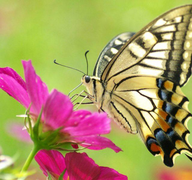 Farfalle di sogno 2017